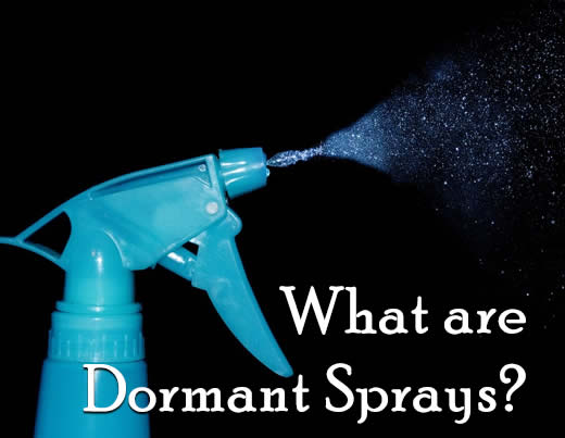 what are Dormant Sprays