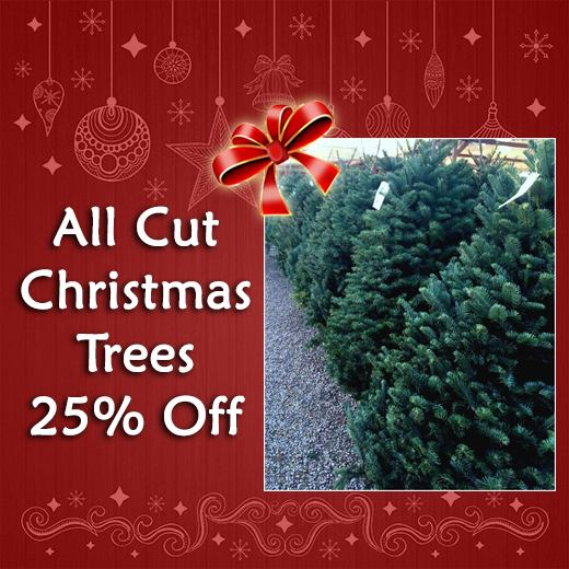 All Cut Christmas Trees 25% Off